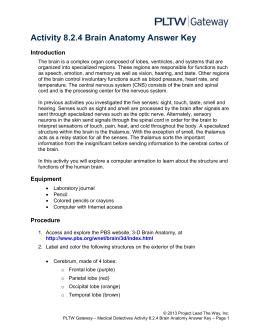 Activity 8.2.4 Brain Anatomy Answer Key Introduction